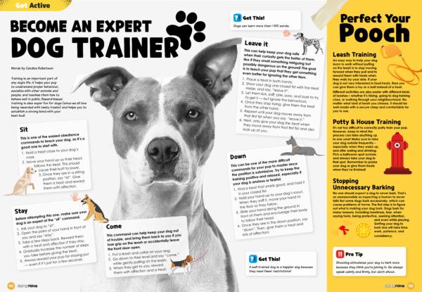 Become an expert dog trainer